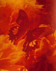 I oranges & sunshine l Rainbow Aesthetic, Orange Aesthetic, Aesthetic Colors, Aesthetic Pictures, Aesthetic Grunge, Aesthetic Vintage, Aesthetic Photo, Orange Walls, Orange Yellow