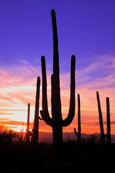 USA - Sunset in Arizona Sonora Desert