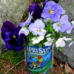 container gardening picture of juice box container garden stuffed with pansies and violas - Photo © Kerry Michaels