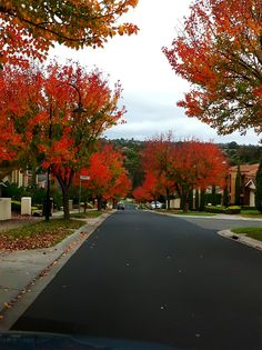 The beauty of an Autumnal street scape in Melbourne, Victoria, Australia