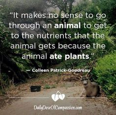 Plants have protein.