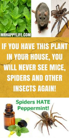 Insects are members of the group of arthropods, and can be of various species. There are around 200 million of insects.