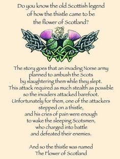 The legend of the thistle. Scottish sayings. Scotch, Scottish Gaelic, Scottish Highlands, Scottish Sayings, Scottish Thistle Tattoo, Scottish Clans, Scottish Tattoos, Scottish Toast, Scottish Symbols