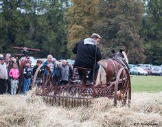 Le battage de foin #cheval #attelage #ferme