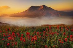 Mt.St.Helens Sunrise  by kevin mcneal, via Flickr