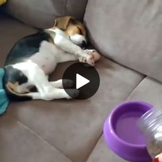 How to wake a gluttonous dog