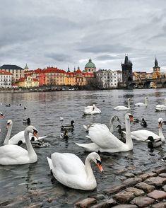 Prague Guide, Prague Czech Republic, Europe, Gallery, Animals, Beautiful, Instagram, Animales, Roof Rack