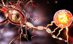 Drugs that help repair the nerve cell lining that's damaged in multiple sclerosis were found to target certain enzymes. The finding could help researchers develop new treatments for multiple sclerosis. Chemo Brain, Cidp, Optic Nerve, Us Health, Spinal Cord, Autoimmune Disease, Parkinson's Disease, Alzheimers, Chronic Pain
