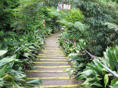Seguindo o caminho do verde!