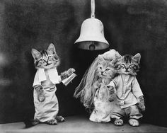 """16in x 20in Giclee Photo Print Harry Whittier Frees was born in Reading, Pa., in the spring of 1879, and was an extremely famous photographer of cutesy animals. He had a """"eureka moment"""" at a family b"""