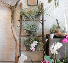A ladder plant holder? Genius.