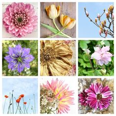 Photographing Flowers for Instagram...Some top tips!