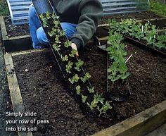 Pas bête ! semis à l'abri de salades et ou de  pois dans une gouttière. Fruit Garden, Edible Garden, Vegetable Garden, Raised Planter Beds, Dream Garden, Horticulture, Amazing Gardens, Trees To Plant, Garden Landscaping