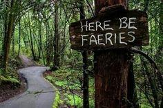 Imagem de faery, fairy, and forest