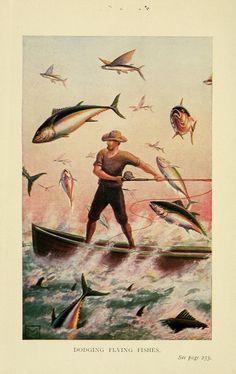 Fish Stories Alleged