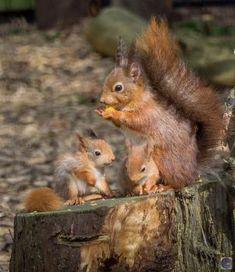 Cute Funny Animals, Cute Baby Animals, Animals And Pets, Amazing Animal Pictures, Beautiful Pictures, Squirrel Pictures, Black Cat Tattoos, Photo Animaliere, Cute Squirrel