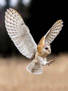 37 More Superb Owls