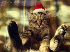 Feliz Natal! - Merry Christmas!