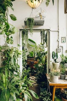 white room filled with green plants. / sfgirlbybay