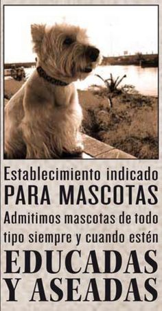 En nuestra casa los animales educados son bienvenidos! #viajar