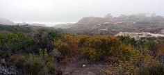 Torrey Pines park on a foggy day