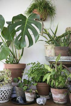 Att ställa och hänga gröna växer i olika nivåer ger känslan av att komma närmre naturen. Det gillar vi på Skanska Nya Hem!
