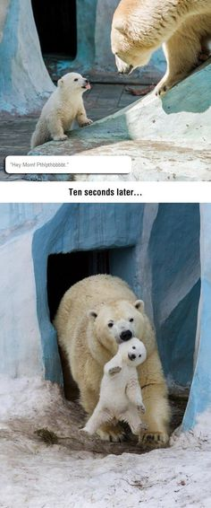 Disrespectful Baby Polar Bear. And that's the cutest thing I have ever seen