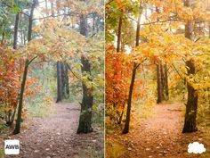 De foto links is gemaakt met de automatische witbalans-instelling. De foto is een beetje blauw-groenig. De foto rechts is gemaakt met de witbalans op bewolkt. Het beeld is hierdoor warmer van kleur.
