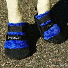 Ultra Paws Cool Boots. Just in time for the warm months. Deflects up to 75 degrees F (24 degrees C) surface temperature away from your dog's paw. Designed for protection from hot surfaces – sidewalks, concrete, streets, boats, docks and sand.  http://whywewag.com/shop/product/ultra-paws-cool-boots/