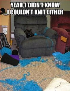 Yeah, I didn't know I could knit either - cat yarn mess.