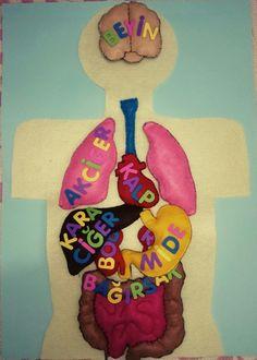 Keçeden yaptığım iç organlarımız, cırt cırt sayesinde takıp çıkarmak da mümkün... School, Montessori, Character, Human Body, Pattern, Lettering