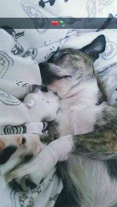 Er schläft
