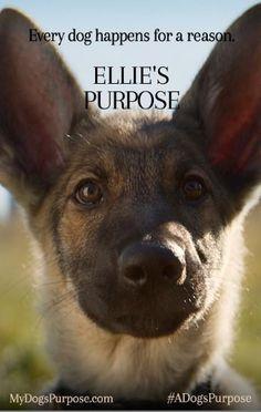 A Dog's Purpose - Book & Movie