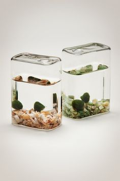 Luck in a Bottle -- Marimo moss balls are said to live to be 100 years old, making them ideal family heirlooms. Much folklore surround these mystical little aquatics, proffering good luck and everlasting love. http://shop.pistilsnursery.com/products/marimo-moss-set