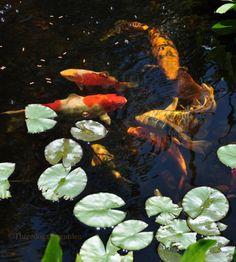 outdoorsanctuaries:    (via Three Dogs in a Garden: The Art of Gardening)