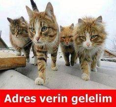 Trafodaki kedi caps'leri! | Galeri | Sözcü Gazetesi