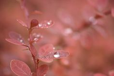 Sigma DP3 Merrill  Blog: http://fotogenerell.wordpress.com/