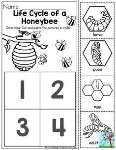 40 Amazing Bumblebee Preschool Theme Ideas images in 2019