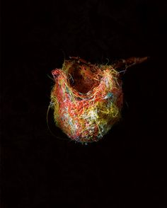 photography by richard barnes via a billion tastes and tunes #photography #nests #birds #thread #richardbarnes #enchantedforest