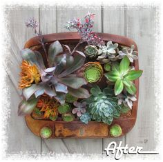 Vintage TV Planter - Build something worth watching. This inventive project turns an old TV faceplate into an eye-popping succulent planter. Types Of Succulents, Colorful Succulents, Hanging Succulents, Succulents In Containers, Succulent Arrangements, Hanging Plants, Succulents Garden, Vertical Succulent Gardens, Succulent Planter Diy