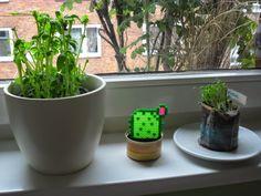 HohlwegsSchoeneDinge: Kaktus für Menschen ohne grünen Daumen