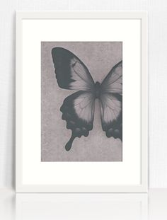 Black and white butterfly photography print