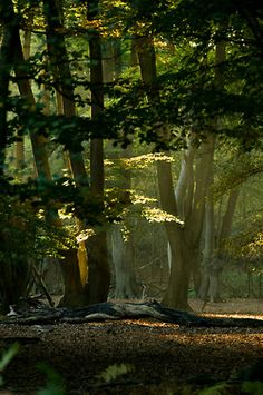 Sunset Epping Forest England C Loves Forests The Smell The Sounds The Quiet