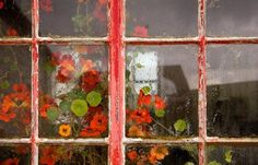 """""""Nasturtium flowers in Skye-silversmith's window."""" Isle of Skye, Scotland. Luz Natural, Art Et Illustration, Illustrations, Quiet Storm, Red Cottage, Cottage Gardens, Cottage Style, Love The Earth, Window View"""