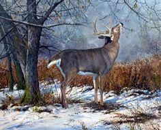8:15 Scent Check Deer Paintings, Wildlife Paintings, Wildlife Art, Hunting Art, Deer Hunting, Deer Art, Moose Art, Whitetail Deer Pictures, Hunting Pictures