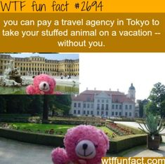 WTF Fun Facts is updated daily with interesting & funny random facts. We post about health, celebs/people, places, animals, history information and much more. New facts all day - every day! Wtf Fun Facts, True Facts, Funny Facts, Funny Memes, Hilarious, Random Facts, Crazy Facts, Random Stuff, Funny Stuff