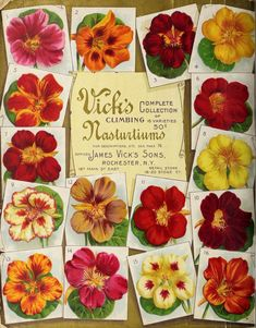1901 - Vick's garden and floral guide, - Biodiversity Heritage Library