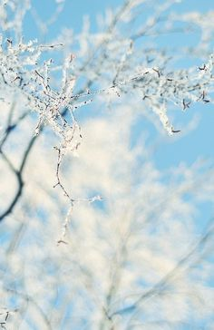 Frost (white against blue)