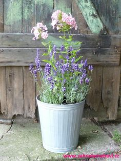 Phlox and lavender in pot Small Gardens, Window Sill, Garden Pots, Lavender, Plants, Garden Planters, Little Gardens, Window Frames, Plant