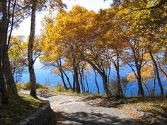 Category:Trees in autumn - Wikimedia Commons